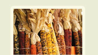 2015 Durham Fall Fair Book